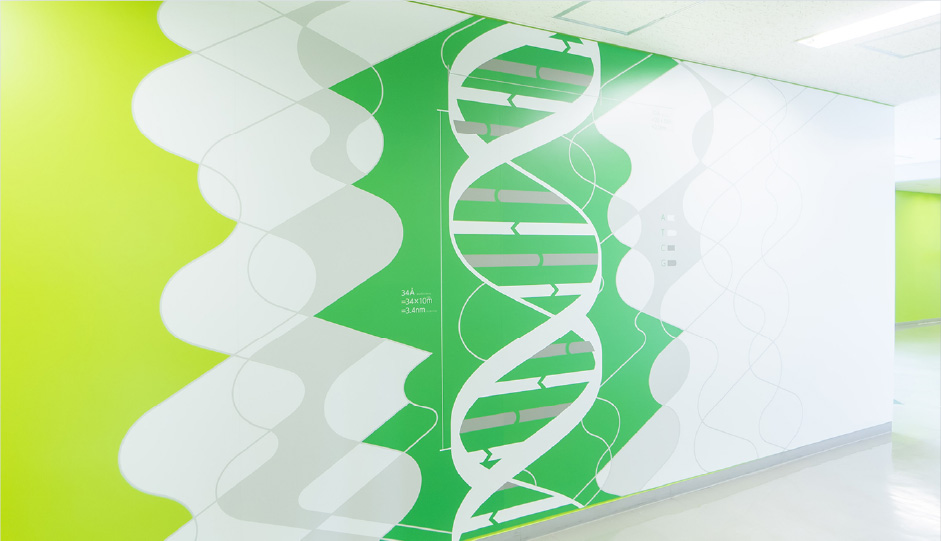 N 棟2 階「DNA 二重螺旋」
